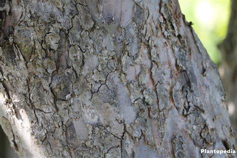 apfelbaum schneiden wann apfelbaum schneiden wann wann und wie sie einen apfelbaum
