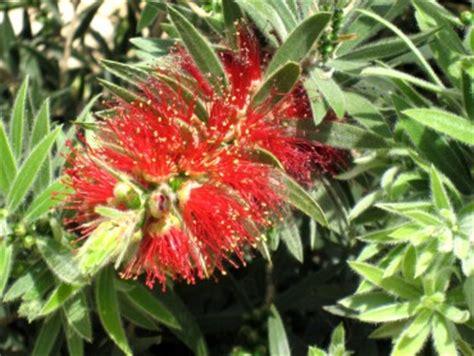 winter bloemen australie welkom op onze mediterrane tuin