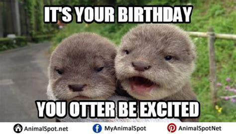 Otter Meme - otter memes