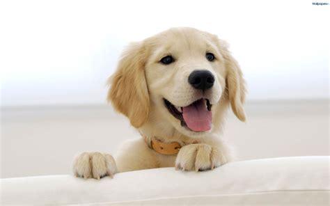 oh puppy secret puppy page