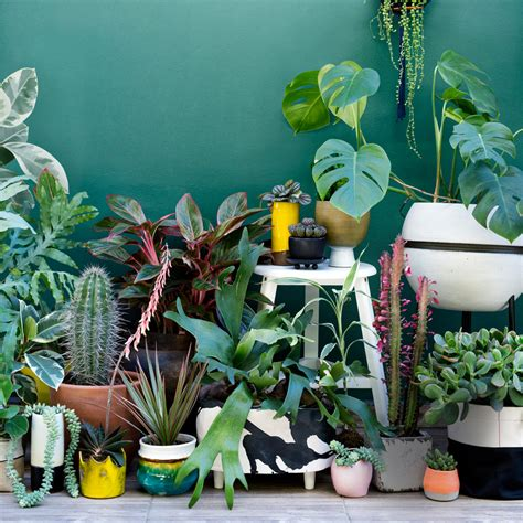 Creative Home Decorating by Urban Jungle Living And Styling With Plants