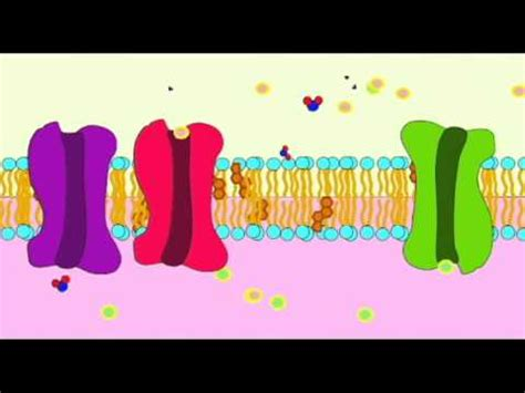 ap biochemistry proteins   cell membrane youtube
