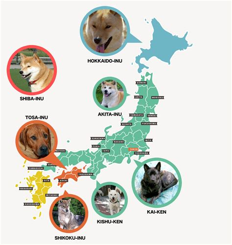 japanese breed dogs japanese breeds and how to get them