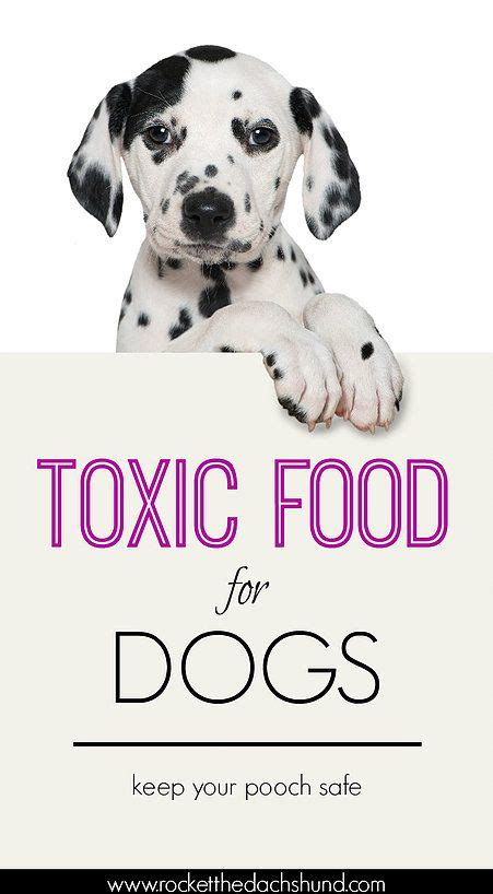 deadly foods for dogs 25 b 228 sta toxic foods for dogs id 233 erna p 229