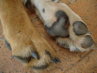 cracked paws paws free clip free clip on clipart library