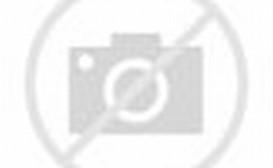 Eating Two Hummingbirds Flower