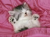 Cute Kittens Part 4 Part2 1 Baby