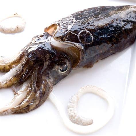 cucinare ricci di mare texture di ricci di mare e seppia fresco pesce