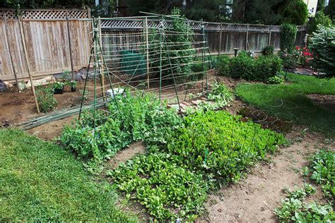 veg garden layout tips for planning a vegetable garden layout on craftsy