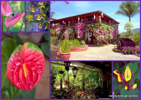 Vallarta Botanical Gardens by Vallarta Botanical Gardens Http Www Puertovallarta Net What To Do Top Ten Tours In