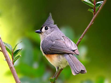 grey wallpaper with birds on cool grey bird grey bird animals birds hd desktop wallpaper