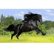 HD Animal Wallpaper Of A Beautiful Black Horse On Field With Grass