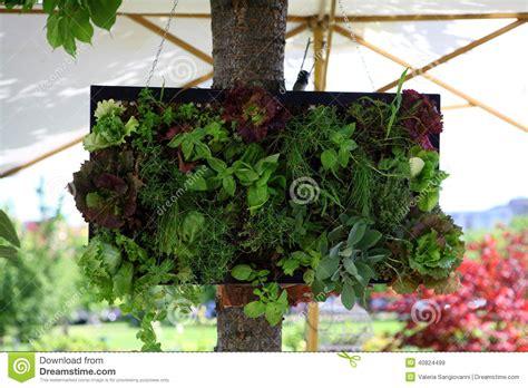 Small Vertical Garden Stock Photo   Image: 40824499