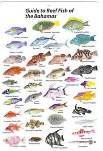 List Of Types Of Seafood   List Of Sea Animals   Animal and the