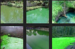 cara membuat umpan ikan mas air hijau umpan ikan mas air hijau tanpa sirkulasi raja umpan