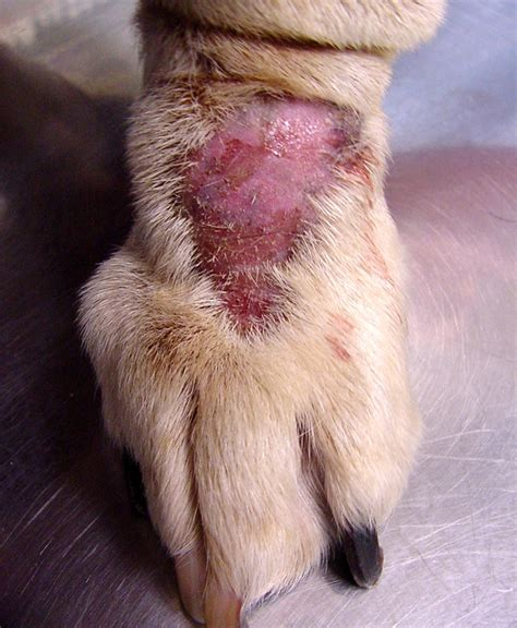 what to do for spots on dogs how to cure spots
