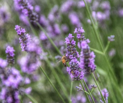 Bee Garden Flowers The Best Flowers For Attracting Bees