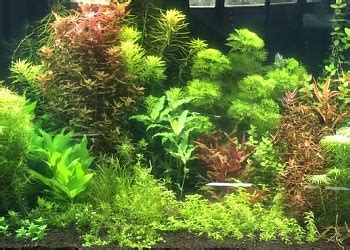 Takashi Amano Aquascaping Techniques by Tips And Tricks For Style Aquascaping Barr Report