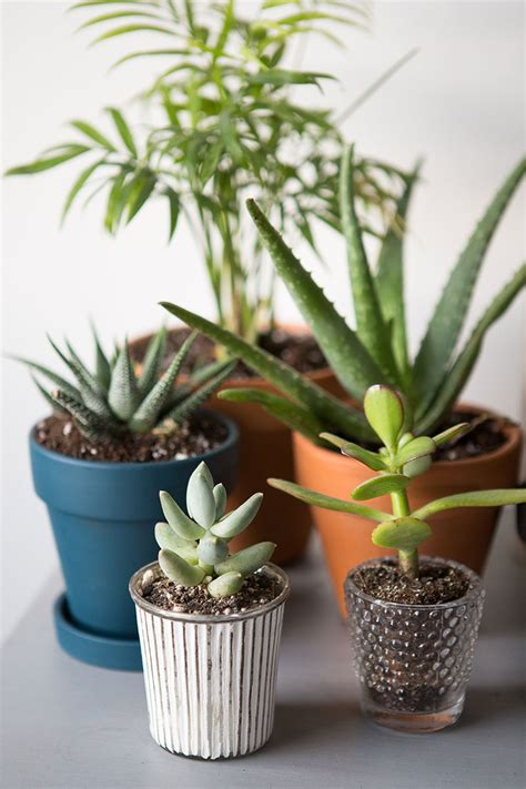 indoor plants images how to keep your indoor plants alive the everygirl