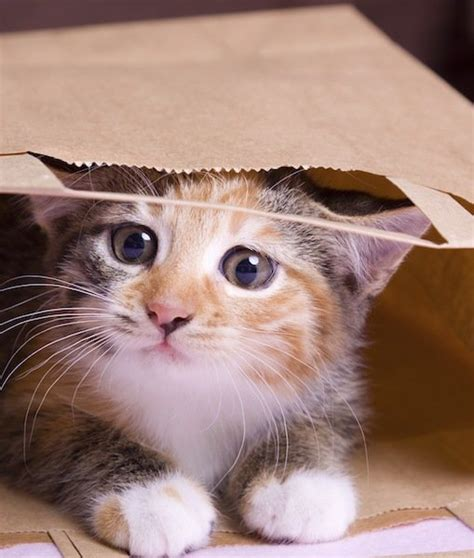 7 weird cat behaviors and what they mean cats tips