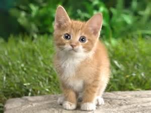 <strong>kitten</strong>+1.jpg