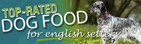 english setter dog food best dog food for an english setter dog food guru