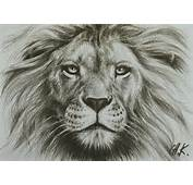 Lion Image Drawing On Share Online