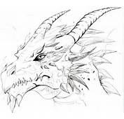 My 1st Dragon Sketch By Trunks24