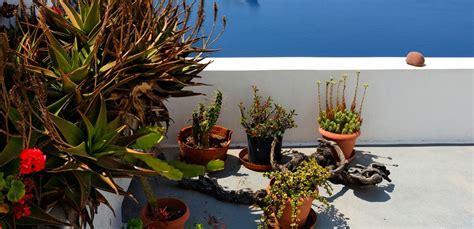 piante da veranda piante da veranda tq02 187 regardsdefemmes