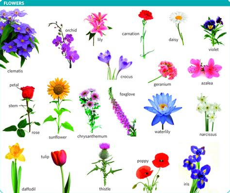 flower meaning  flower  longman dictionary