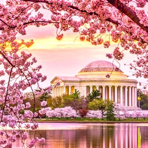 cherry blossom festival dc home design 3d gold app review best healthy