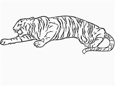 Baby Tiger Outline by Tiger Outline Coloring