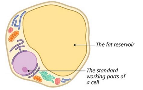 healthy fats are called is stored in cells called low carb foods list