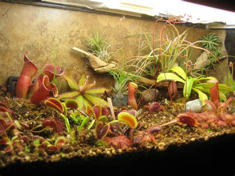 carnivorous plant terrarium carnivorous plants terrarium