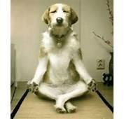 Zen Hond  Grappig Plaatje Grappige Plaatjes Leuke Fotos En Funny