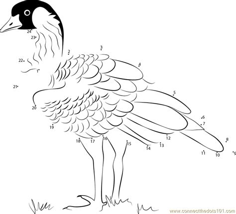 nene bird coloring page branta sandvicensis dot to dot printable worksheet