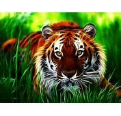 Wallpapers Tiger 3D