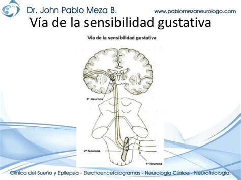 imagenes neuroanatomia pdf neuroanatomia vias medulares