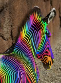 what color is a zebra an extreemely rainbow zebra 171 cry havoc and let s