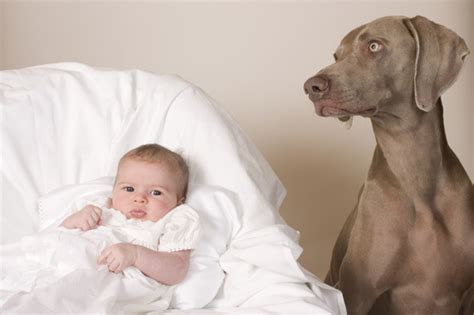 dogs and babies kills infant reminder to take care with pets and babies