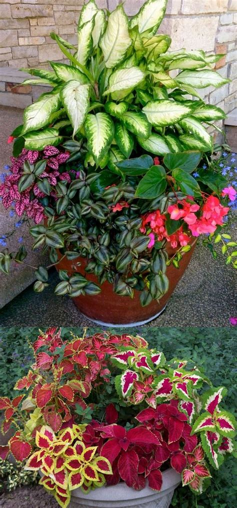 colorful shade plants 16 colorful shade garden pots and plant lists hometalk