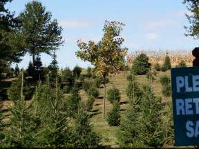 camelot family farm cut your own tree near chicago