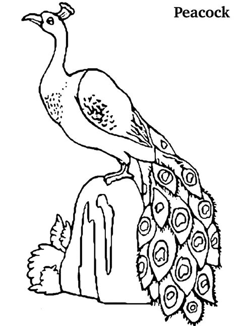 indian peacock coloring page free coloring pages of peacok feathers