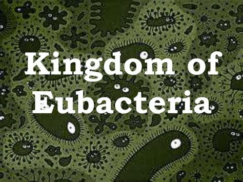 exle of eubacteria the eubacteria