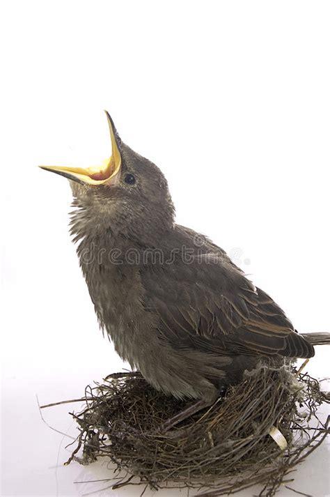 feeding little hungry bird stock image image of newborn