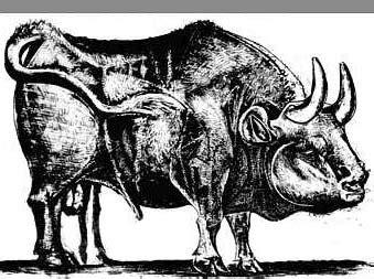 imagenes no realistas artes visuales para dibujar picasso y la abstracci 243 n de un toro vecindad gr 225 fica