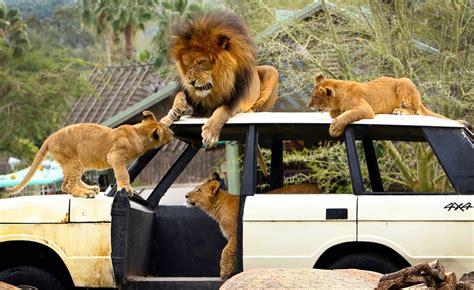 best safari park the top 10 winners of best safari park 2018 amazing places