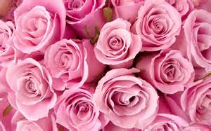 Background Flowers Pink Rose Roses » Home Design 2017