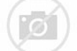 Gambar Bunga Mawar Batik Merah Muda Dalam Pot Hitam Gambar Bunga