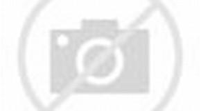 Honda Ninja Motorcycle